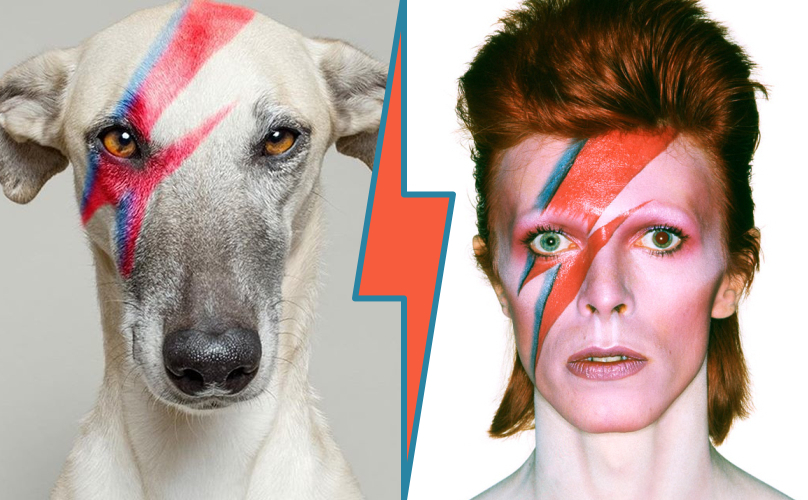 Aladdon Sane-whippet & David Bowie