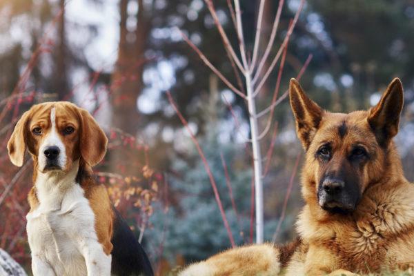 Vet din hund alltid att en hund är en hund?