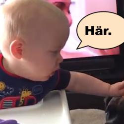 bebis ger hundar kaka