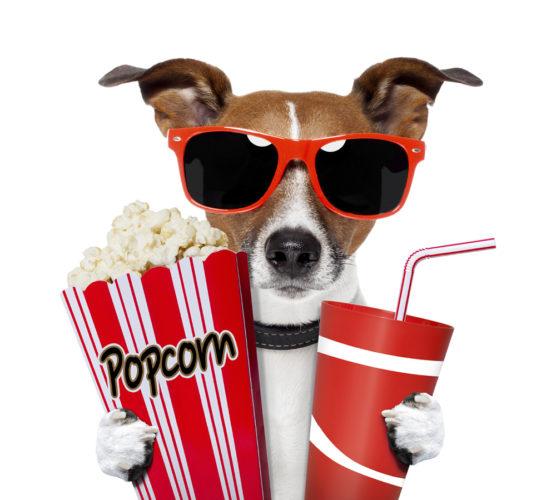 Här får hundarna hänga med på bio!