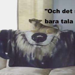 Liten gnällig hund på soffryggen