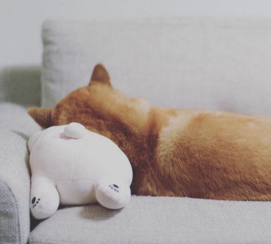Klart man ska sova med favoritnallen