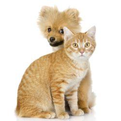 Så blir hund & katt vänner
