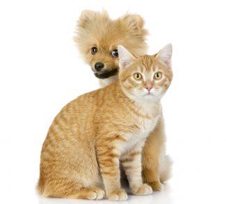 Så Blir Hund Katt Vänner