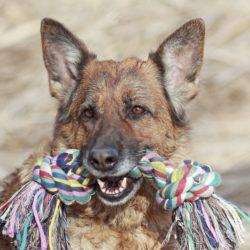 Mycket lek och belöning av sin ägare gör hunden mindre stressad.