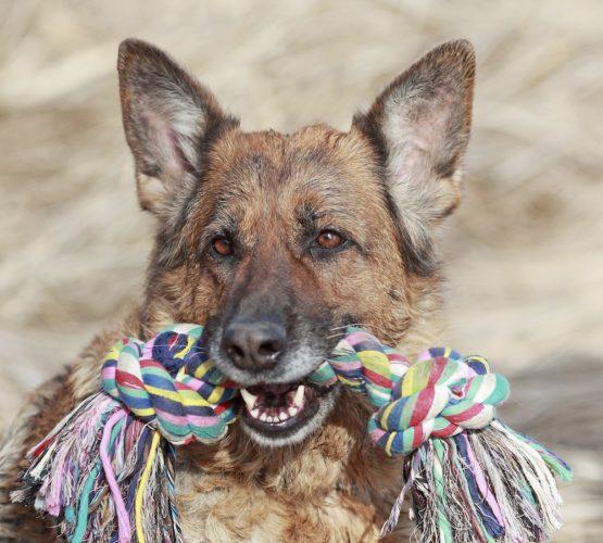 Lekande hundar stressar mindre