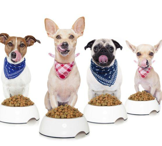 4 hungriga hundar – vinn valfri fodersäck!