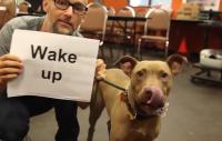 Moby med hund och skylt som det står
