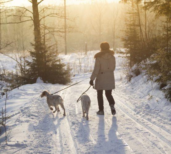 Vinterpromenad med två settrar
