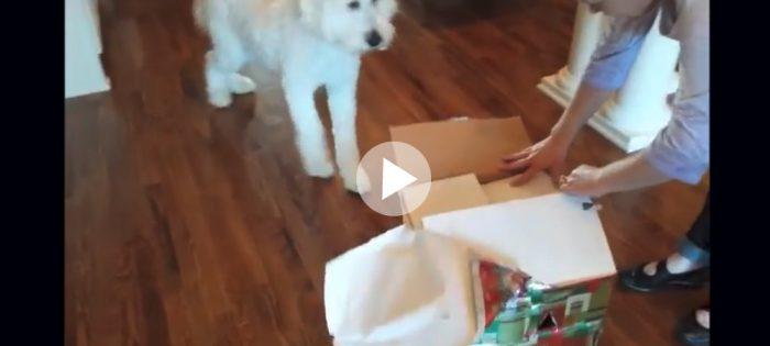 Hunden Rhett får en oväntad present