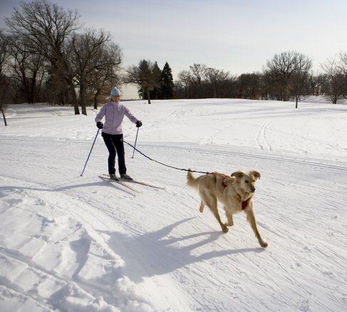 Tips för dig som vill åka skidor med hunden