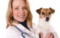 veterinär med hund i famnen