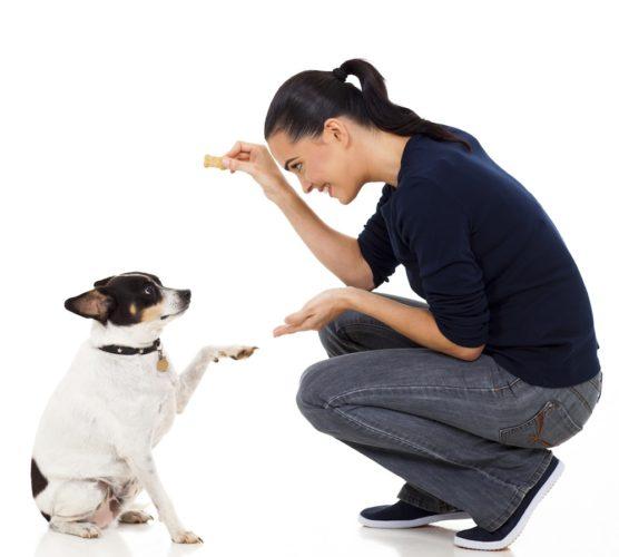kvinna övar med hund