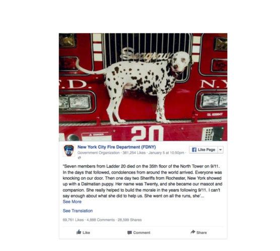 Brandmännen har förlorat sin älskade trösthund Twenty