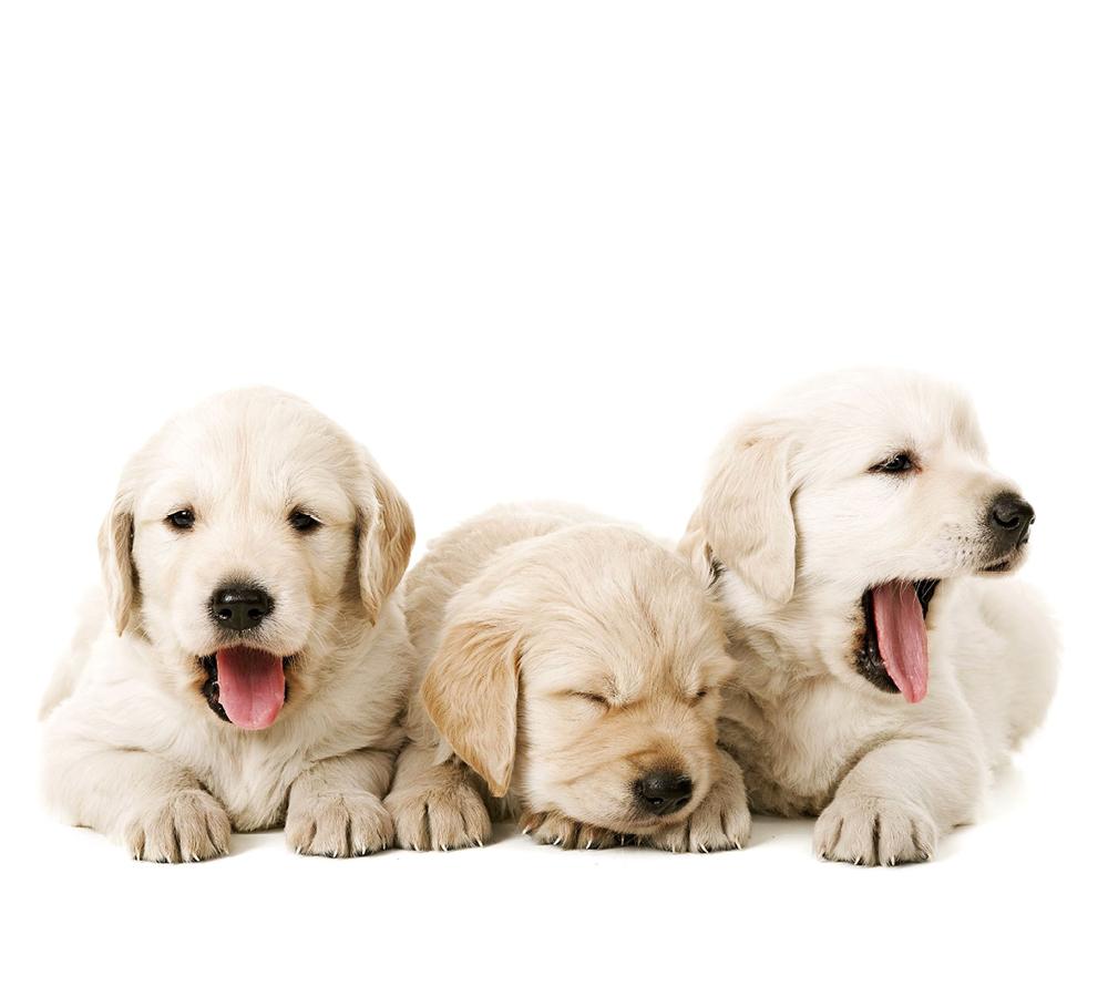 Har Du R 229 D Att K 246 Pa Hund