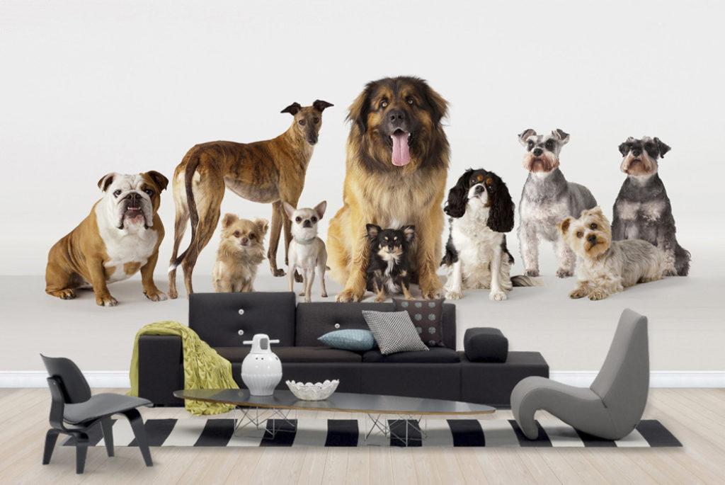 fototapet hundar i grupp