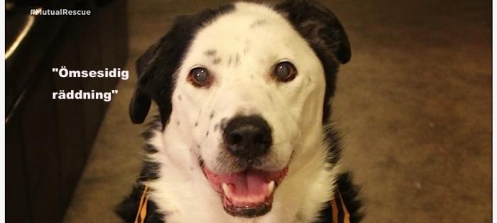 Hunden Peety som adopterades av Eric