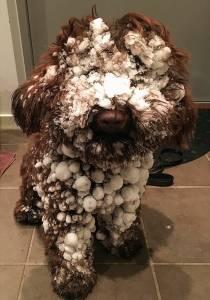 SnöYatzy kopia