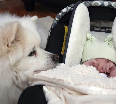 Hund & bebis – så får du det att funka