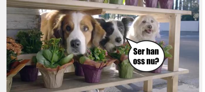 Hundar som spanar