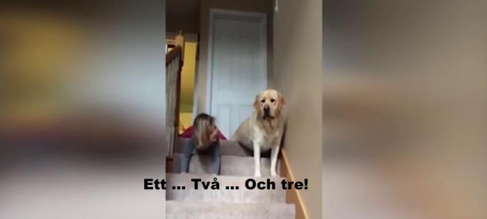 flicka och hund uppe i trapp