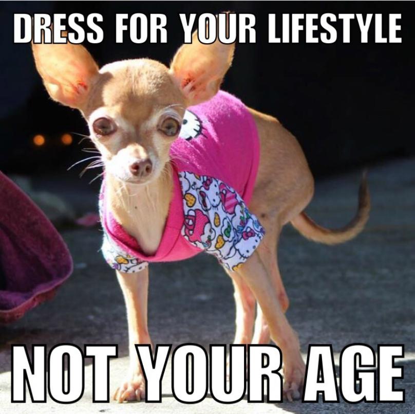 chihuahua i kläder