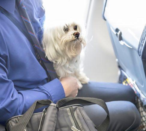 Med det här flygbolaget får husdjur inte längre flyga i lastutrymmet