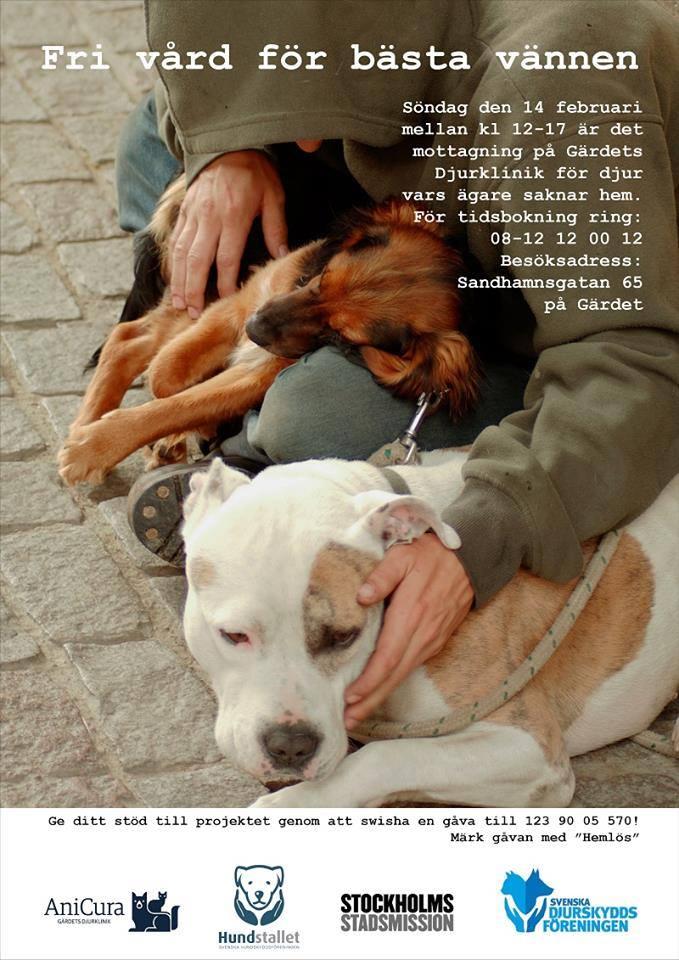 Fri veterinärvård för hemlösas hundar -affisch
