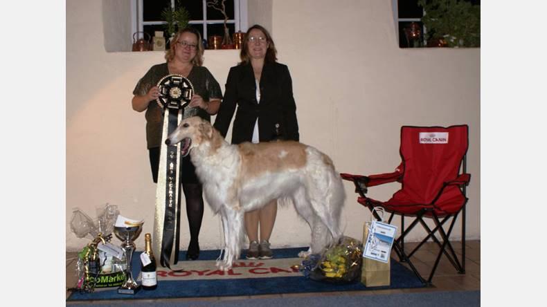 borzoi blev gotlands vackraste hund