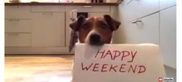 hund håller skylt med text happy weekend/trevlig helg