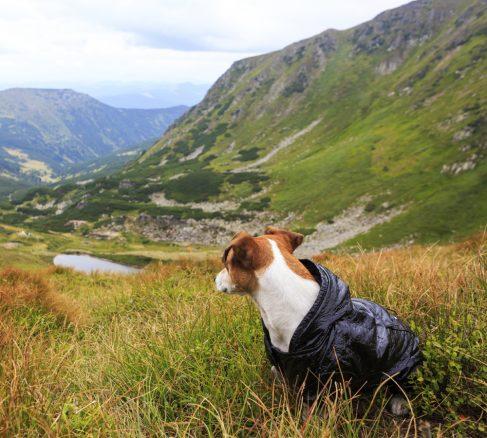 Ny forskning: Hundar har en inbyggd kompass