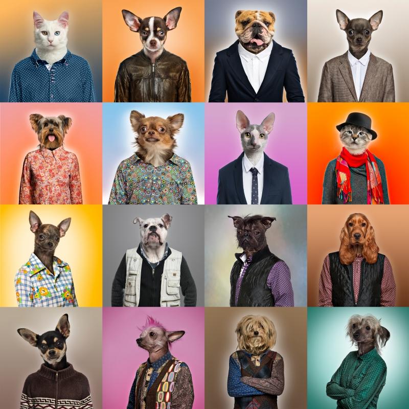 hundar i kläder fototapet