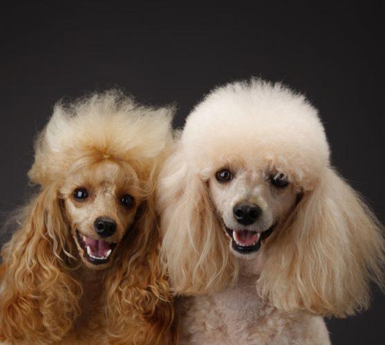 De 10 smartaste hundarna?!