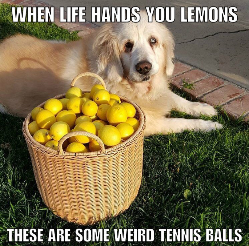 hund med citroner