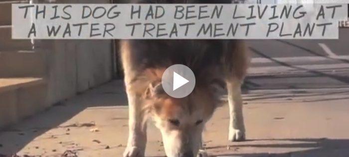 Hittehunden Mufasas nya liv
