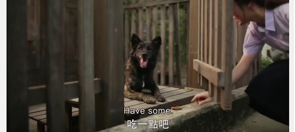 hund vid grind