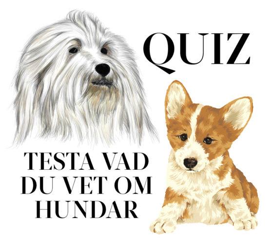 Kul test! Vad vet du om hundar?
