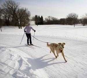 kvinna på skidor med glad hund i koppel