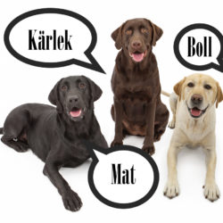 fina labradorer i olika färger