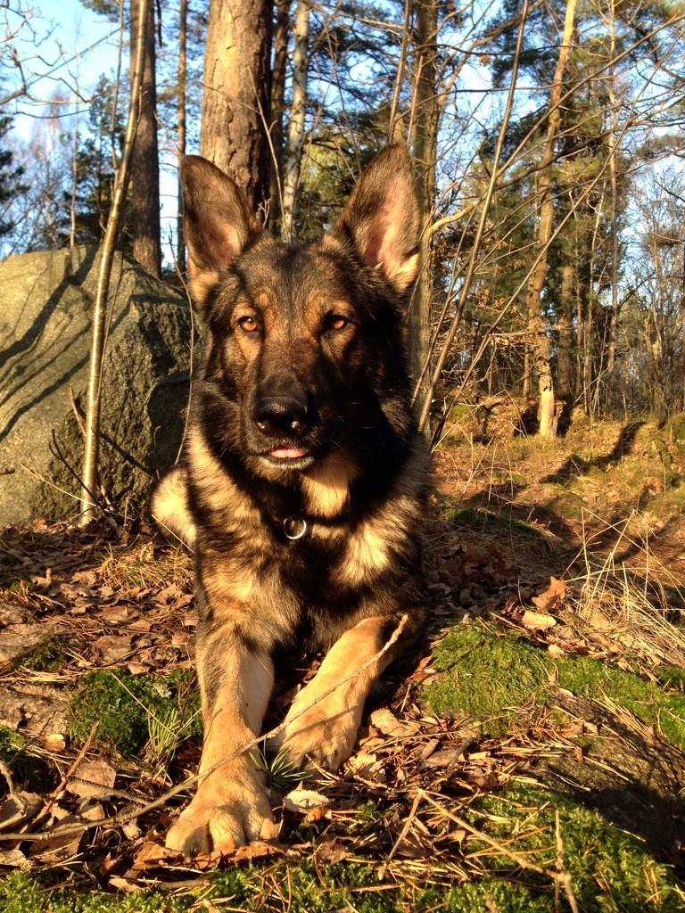 polishunden Uno