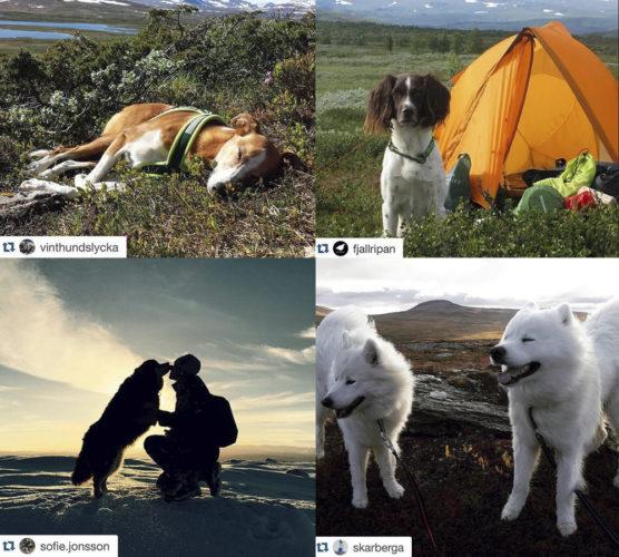 Instagramtips – vandring med hundar