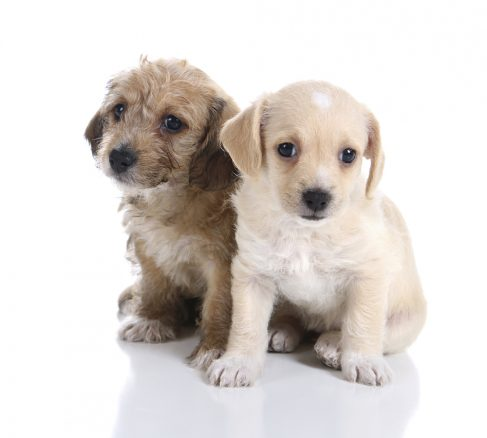 Smuggelhundar – så undviker du dem