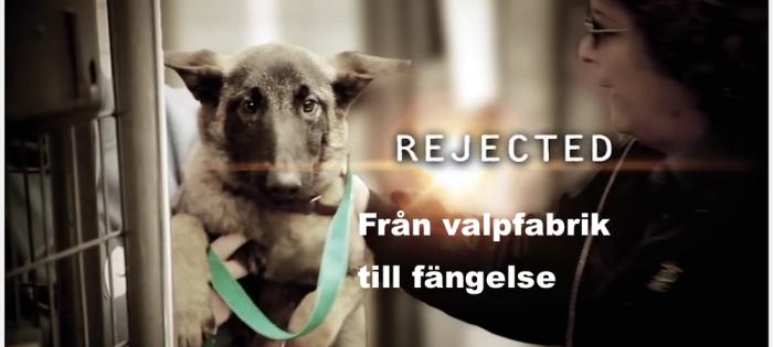 hund från valpfabrik till fängelsets hundprogram