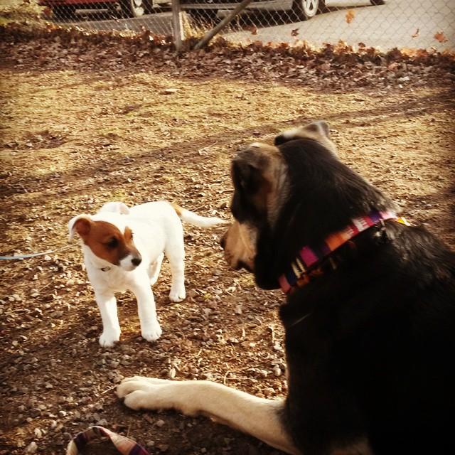 Koi träffar en liten valp