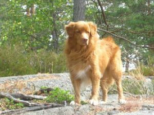 Hunden charlie hittad efter 10 ar