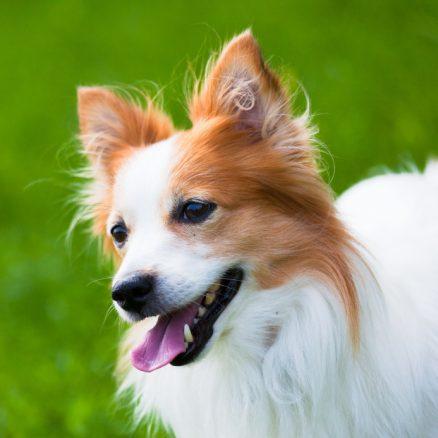 SKKs 12 regler för hundägare
