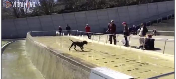 Glad hund badar i fontän