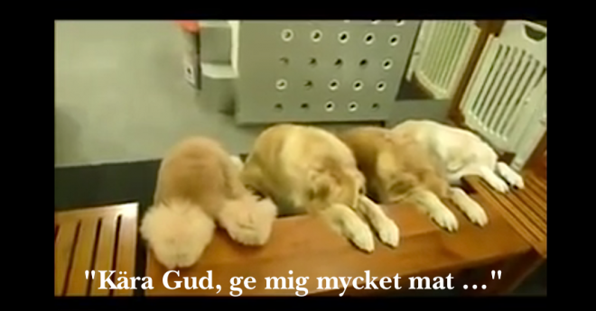 4 hundar ber bordsbön före maten