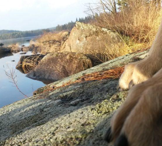 tassar på klipphäll mot vattnet
