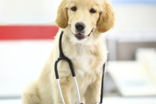 Rösta fram Årets djurklinik 2017